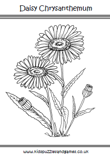 chrysanthemum coloring pages - flowers kids puzzles and games