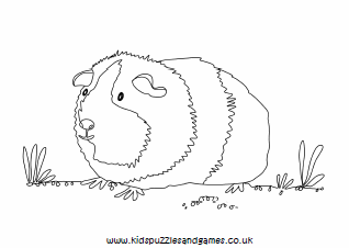 Guinea Pig Colouring Kids Puzzles and Games