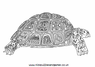 Tortoise Adult Colouring Kids Puzzles And Games