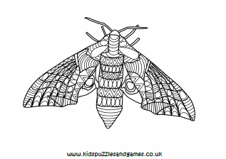 Moth Mindfulness Colouring Page