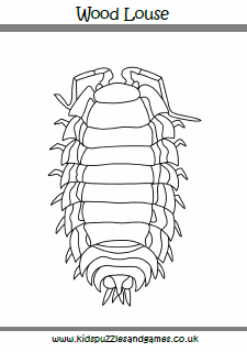 Wood Louse Kids Puzzles And Games